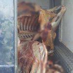 Полтонны мяса сомнительного происхождения изъяли в Хынчештском районе (ФОТО)