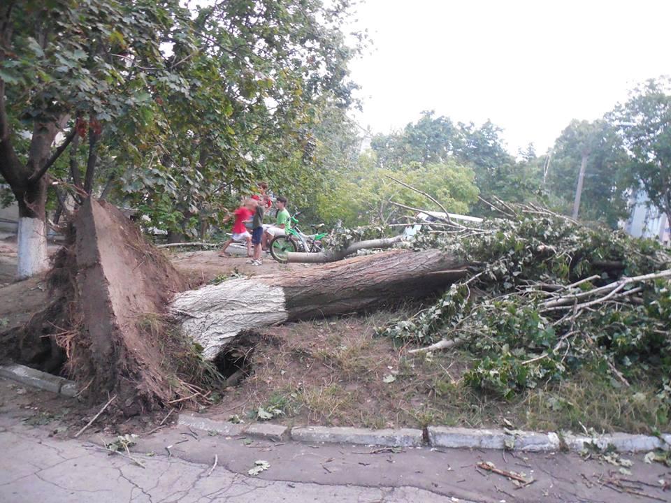 Шквалистый ветер повалил огромный тополь в столице (ФОТО)