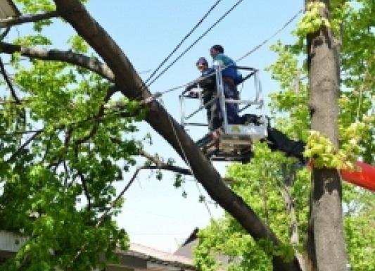 На бульваре Штефана чел Маре продолжают пилить деревья