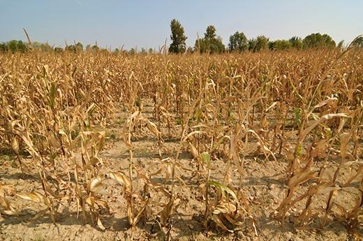 Объявлен желтый код опасности в связи с гидрологической засухой