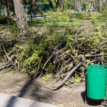 Из кишиневских дворов были эвакуированы все сухие ветки