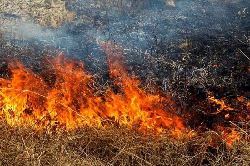 Желтый код пожароопасности продлен для центральных и южных районов страны (ФОТО)