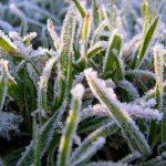 В Молдове ожидаются заморозки