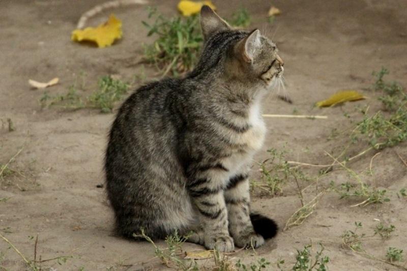 Жители многоэтажки в столице жалуются на невыносимый запах от кошек, наводнивших двор (ВИДЕО)