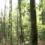 В Молдове впервые проведут инвентаризацию лесного фонда (ВИДЕО)