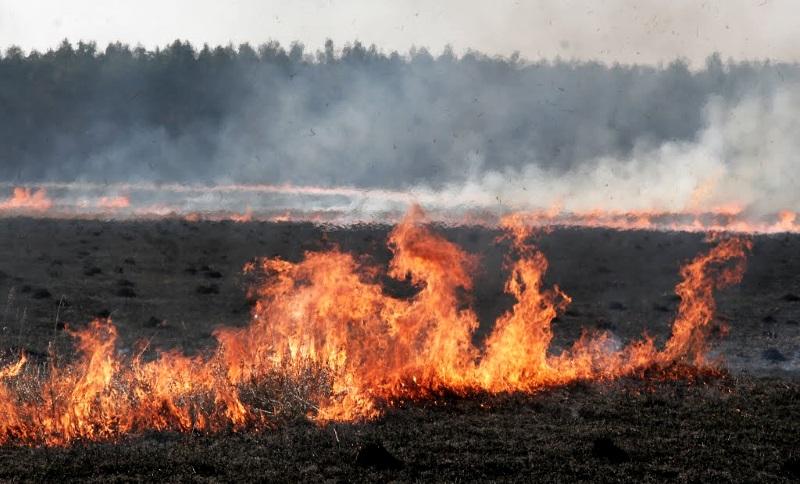 В Молдове объявлен желтый код пожароопасности