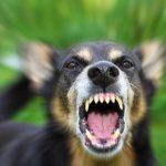 В Комрате бродячая собака покусала ребенка: мальчик в реанимации