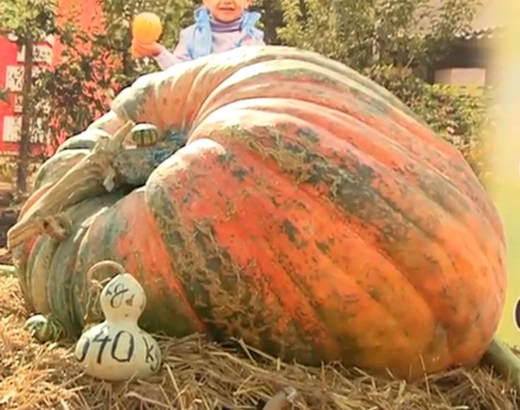 340-килограммовая тыква поразила посетителей фестиваля в Лозова (ВИДЕО)