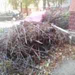 Кишиневцы уличили примэрию в обмане: из дворов столицы вывезены не все ветки (ФОТО)