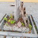 Укладчики плитки на бульваре Штефана чел Маре губят деревья (ФОТО)
