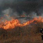 В парке на Рышкановке вспыхнул пожар: огонь тушили целый час