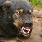 Два новых случая бешенства у животных выявили на территории Молдовы