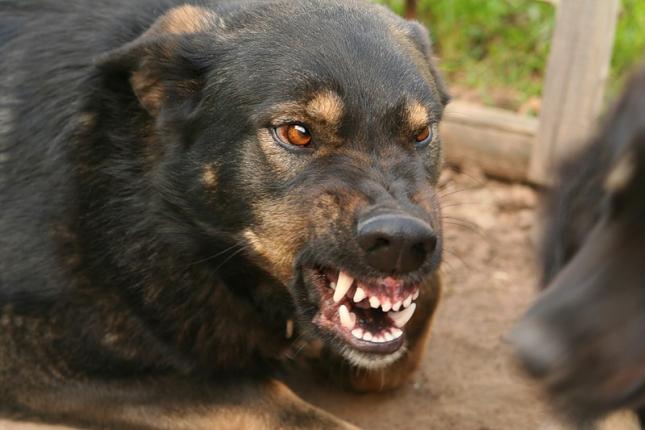 В Молдове выявлено 6 новых случаев бешенства у животных