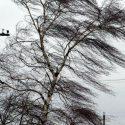 """И снова """"желтый код"""": в Молдове ожидаются ливни и шквалистый ветер"""