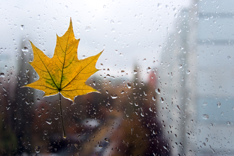 дождь осенью фото