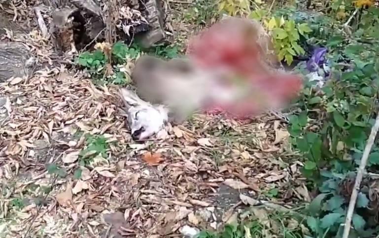 Случай с найденным в столичном парке трупом косули будет расследован прокуратурой