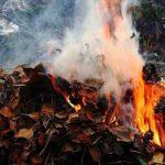 Граждан, сжигающих листья, будут штрафовать