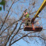 На улице Тестемицану собираются вырубить 25 деревьев под строительство