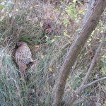 В Теленештах сотрудники Экологической инспекции устроили погоню за двумя браконьерами (ФОТО)