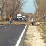 Упавшее дерево преградило дорогу на одной из молдавских трасс (ФОТО, ВИДЕО)