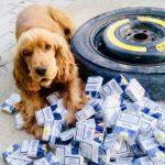 Спаниель-таможенник обнаружил внушительную контрабандную партию сигарет (ФОТО)