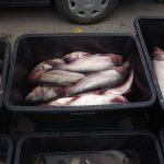 Продавцов свежей рыбы на Каля Басарабией оштрафовали на 6000 леев (ФОТО)