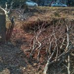 В Кишиневе из-за вырубки деревьев перекрыты некоторые улицы