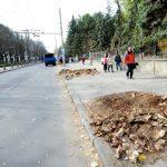 В субботу многие деревья в Центре и на Ботанике будут вырублены