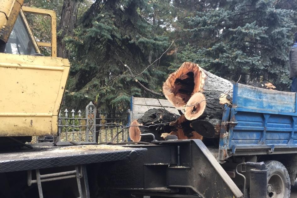 На пяти улицах Кишинева в субботу запланирована чистка деревьев