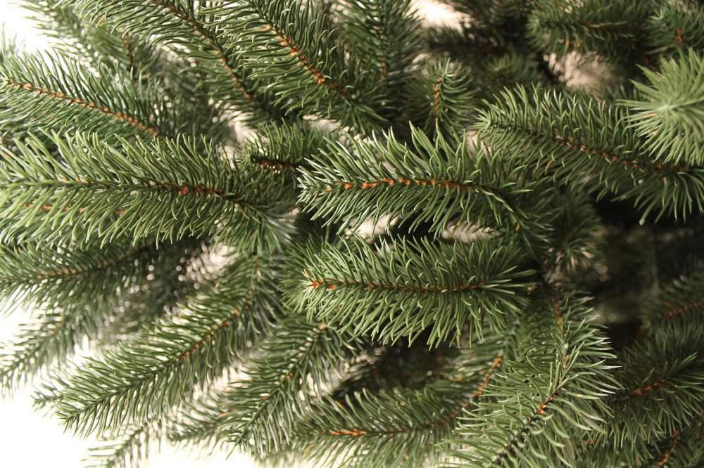 Чебан: Когда елка растет из другого места…