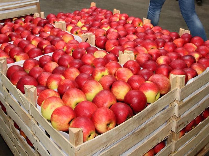 Молдова стала крупнейшим поставщиком яблок в Россию