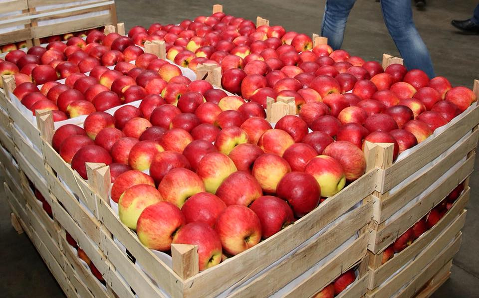 Аграрии с севера страны боятся лишиться из-за Майи Санду экспортных привилегий (ВИДЕО)