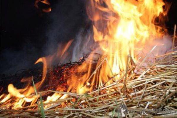Сухая трава на более чем 12 гектарах земли сгорела в Гагаузии