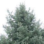 У елки-украинки возникли проблемы на таможне