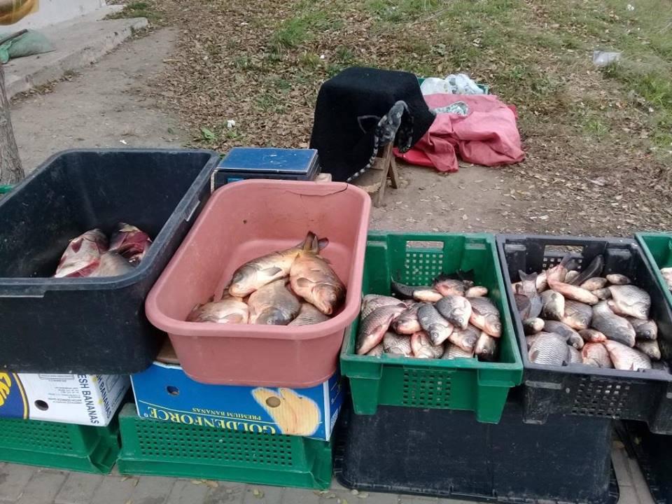 Нелегальных продавцов рыбы в Кишиневе оштрафовали на 3 тысячи леев каждого