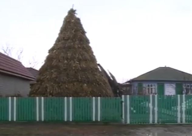 """""""Елка с поля"""" как традиция: сельчанин во второй раз соорудил новогоднее дерево из чеклежа (ВИДЕО)"""
