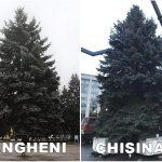 Новогодняя ель в Унгенах оказалась красивее и дешевле столичной (ФОТО)