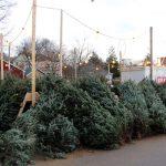 В поисках ёлки: сколько стоит новогоднее дерево в Кишиневе