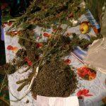 Операция Antidrog: более 80 человек находятся под следствием, наркотиков изъято на 3,5 млн леев (ВИДЕО)