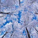 Январь - самый холодный месяц в году в Молдове: когда была зарегистрирована самая низкая температура
