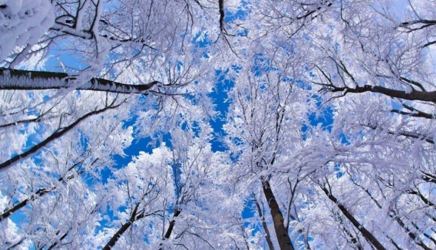 Январь – самый холодный месяц в году в Молдове: когда была зарегистрирована самая низкая температура