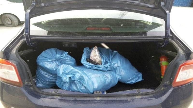 Около 50 кг рыбы обернулись для молдаванина уголовным делом в Румынии