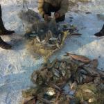 Пограничники поймали молдаванина с 63 кг незаконно выловленной рыбы (ФОТО)