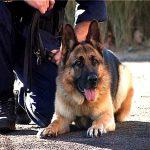 Служебные собаки таможенников обнаружили более 600 тысяч сигарет с начала года