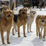 Тревожные цифры: с начала года в Кишинёве сотни человек подверглись нападениям бродячих собак