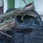 Столичный водитель утром обнаружил на капоте своей машины дерево (ФОТО, ВИДЕО)