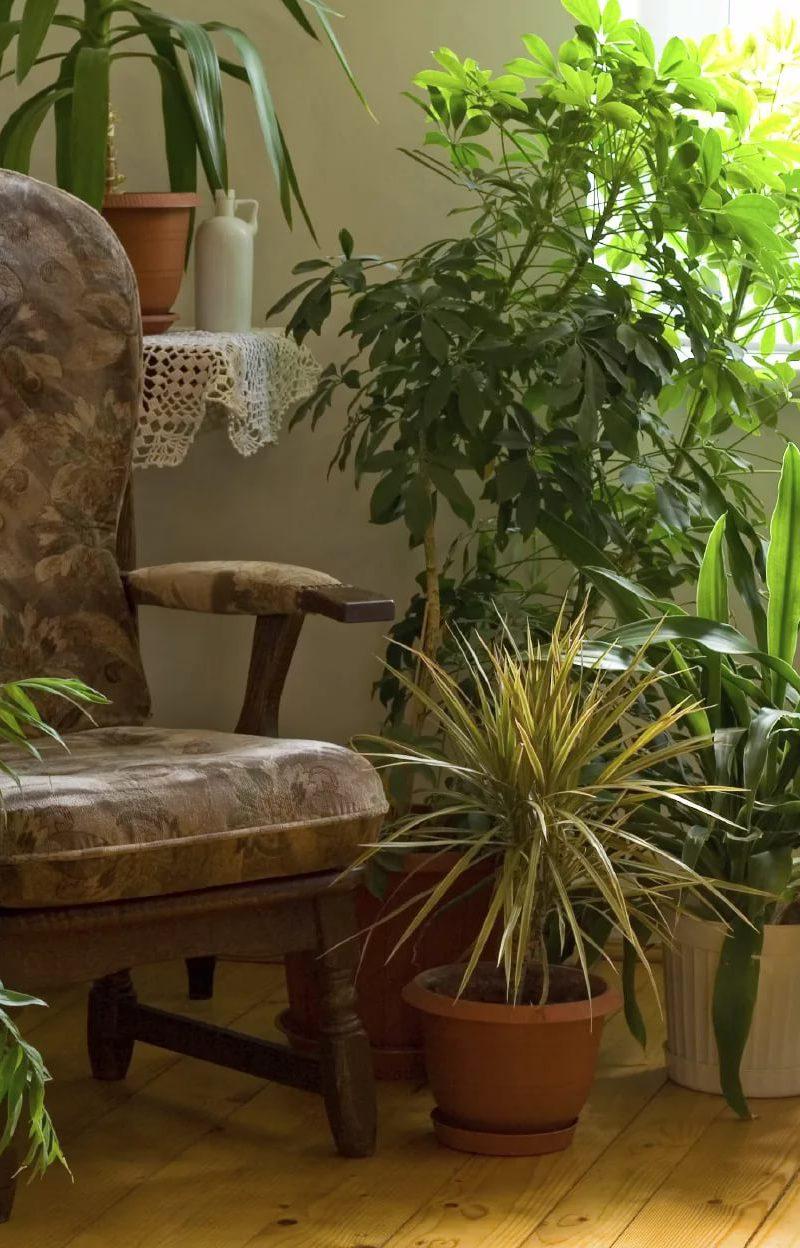 Оранжерея в квартире
