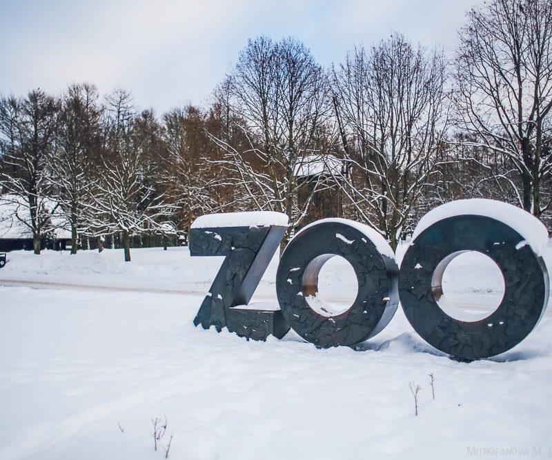 Готовы к зимовке: в столичном зоопарке установили инфракрасные лампы и обогреватели (ВИДЕО)