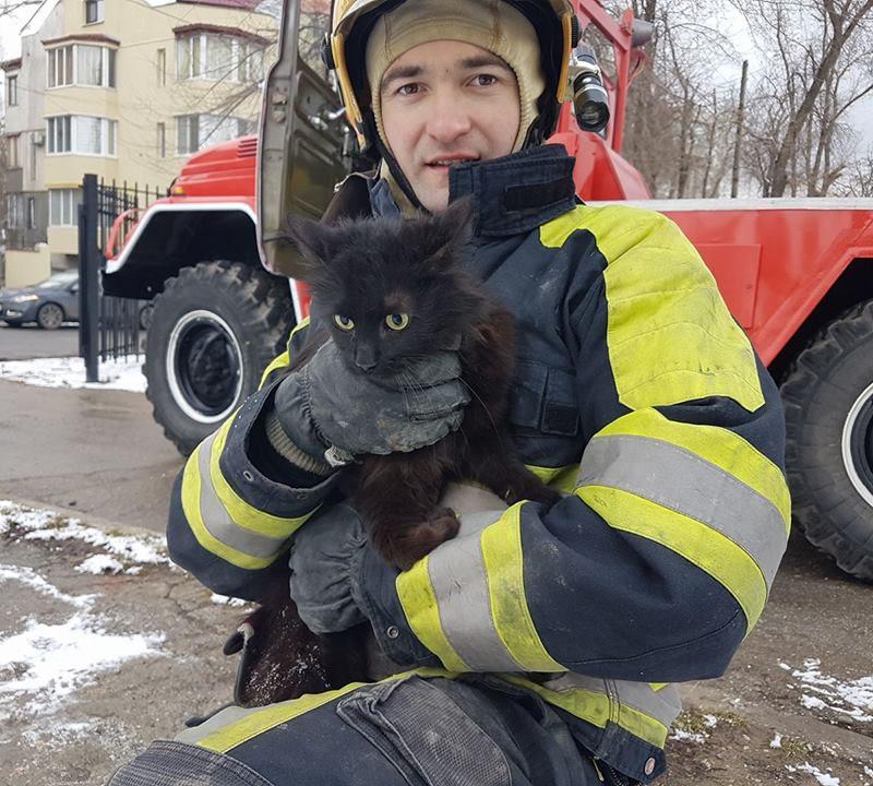В Кишиневе развернулась целая спецоперация по спасению застрявшего на дереве кота (ФОТО)