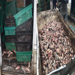 Незаконная торговля рыбой на рынках столицы процветает